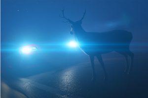 animal sur la route
